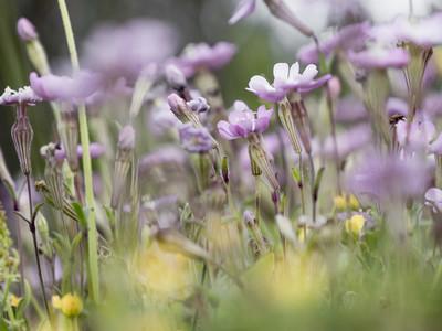 Purple flowers 01