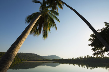 Palm trees leaning over tranquil placid tropical river 01