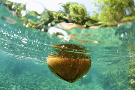 Coconut floating in tropical ocean 01