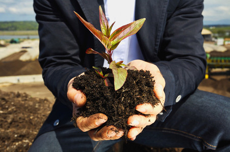 Close up man cupping plant sapling in dirt 01