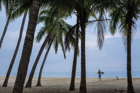Male surfer and dog on tropical ocean beach with palm trees 01