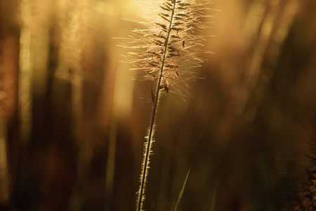 Close up meadow at sunset 01