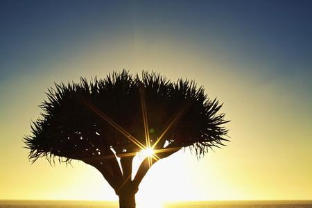 Sunburst shining behind silhouette of tree 01