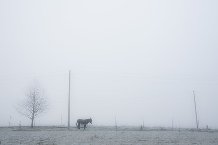 Donkey in serene foggy pasture 01