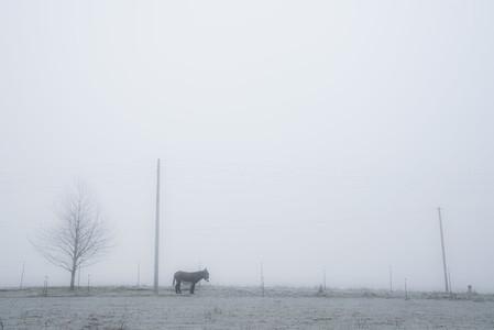 Donkey in serene foggy pasture 01