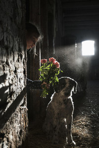 Girl showing flowers to dog in sunny barn 01