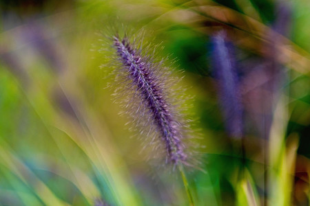 Close up detail fuzzy purple flower 01