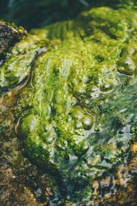 Disgusting rotten algae in water texture
