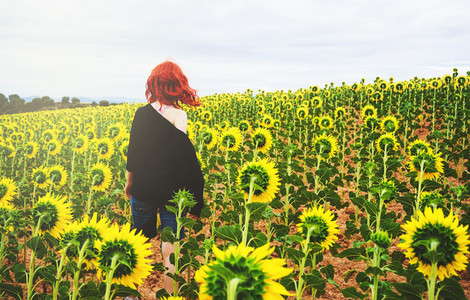 Back view of a redhead young woman in a field of sunflowers
