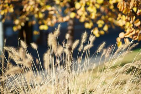 Wild autumn plants