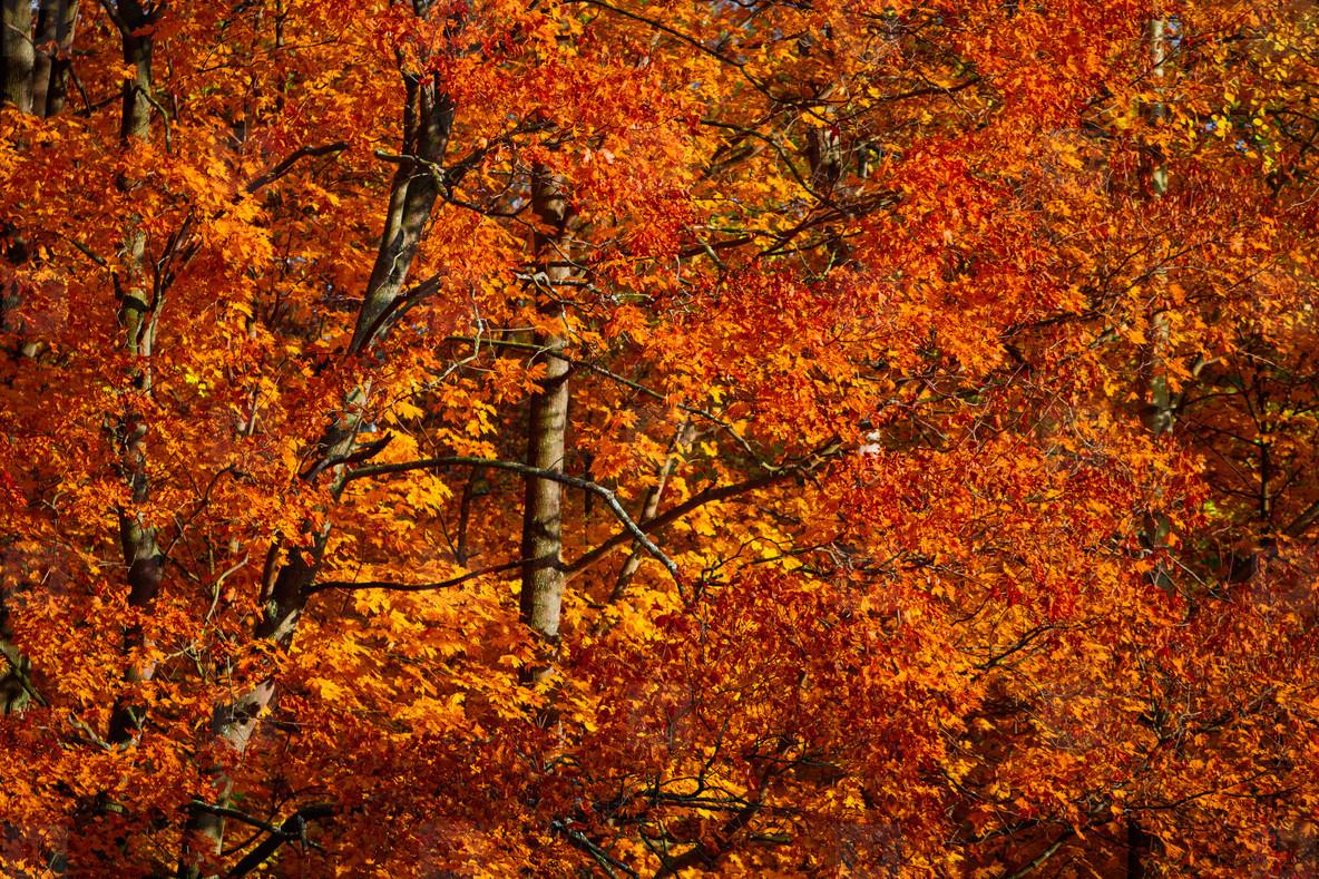 Autumn forest full frame nature background