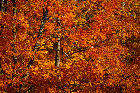 Autumn forest full frame nature background