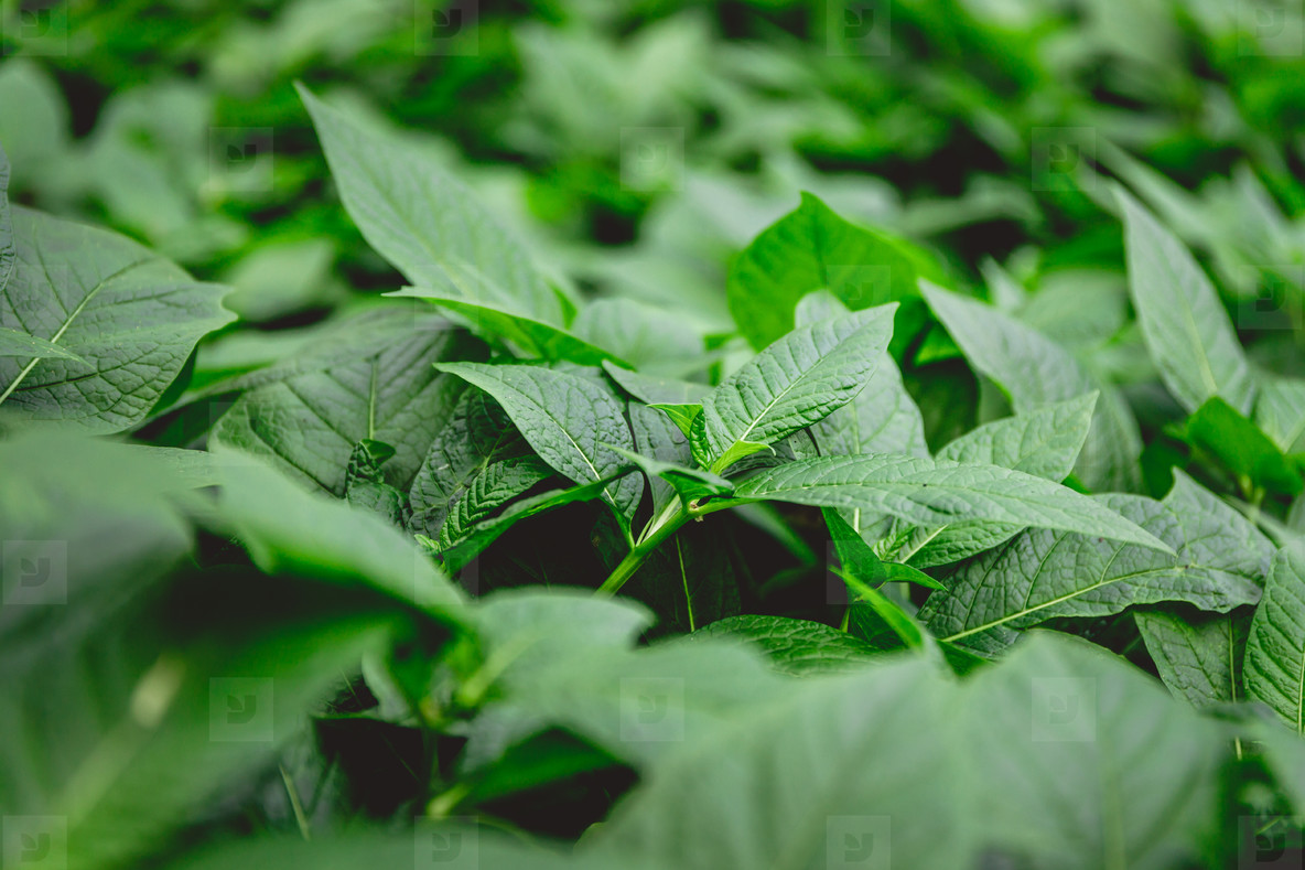 Macro photography of green plants  Nature full frame background