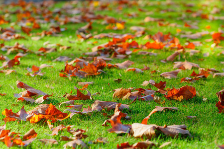 Fallen leaves on the ground Autumn scene in a city park