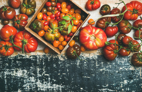 Flat  lay of fresh colorful ripe tomatoes over rustic background