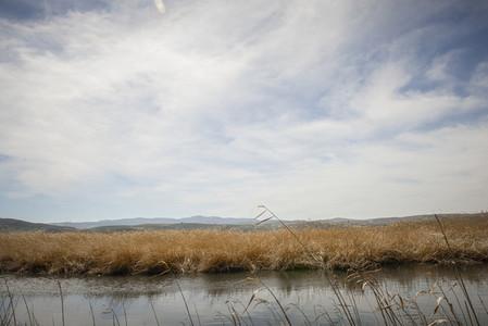 Wetlands with marsh vegetation in Padul