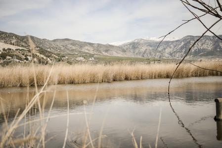 Wetlands with marsh vegetation in Padul Granada Andalusia