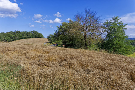 Wheat Fields in Umbria 02