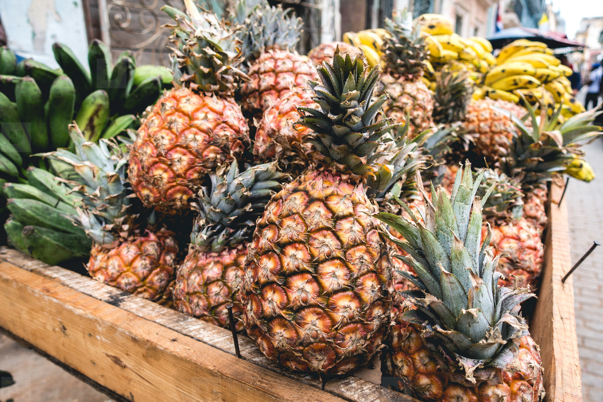Tropical pineapples in crate