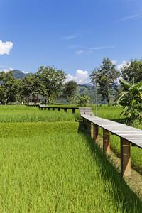 Rice Field Path 01