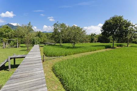 Rice Field Path 02