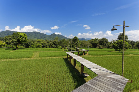 Rice Field Path 03