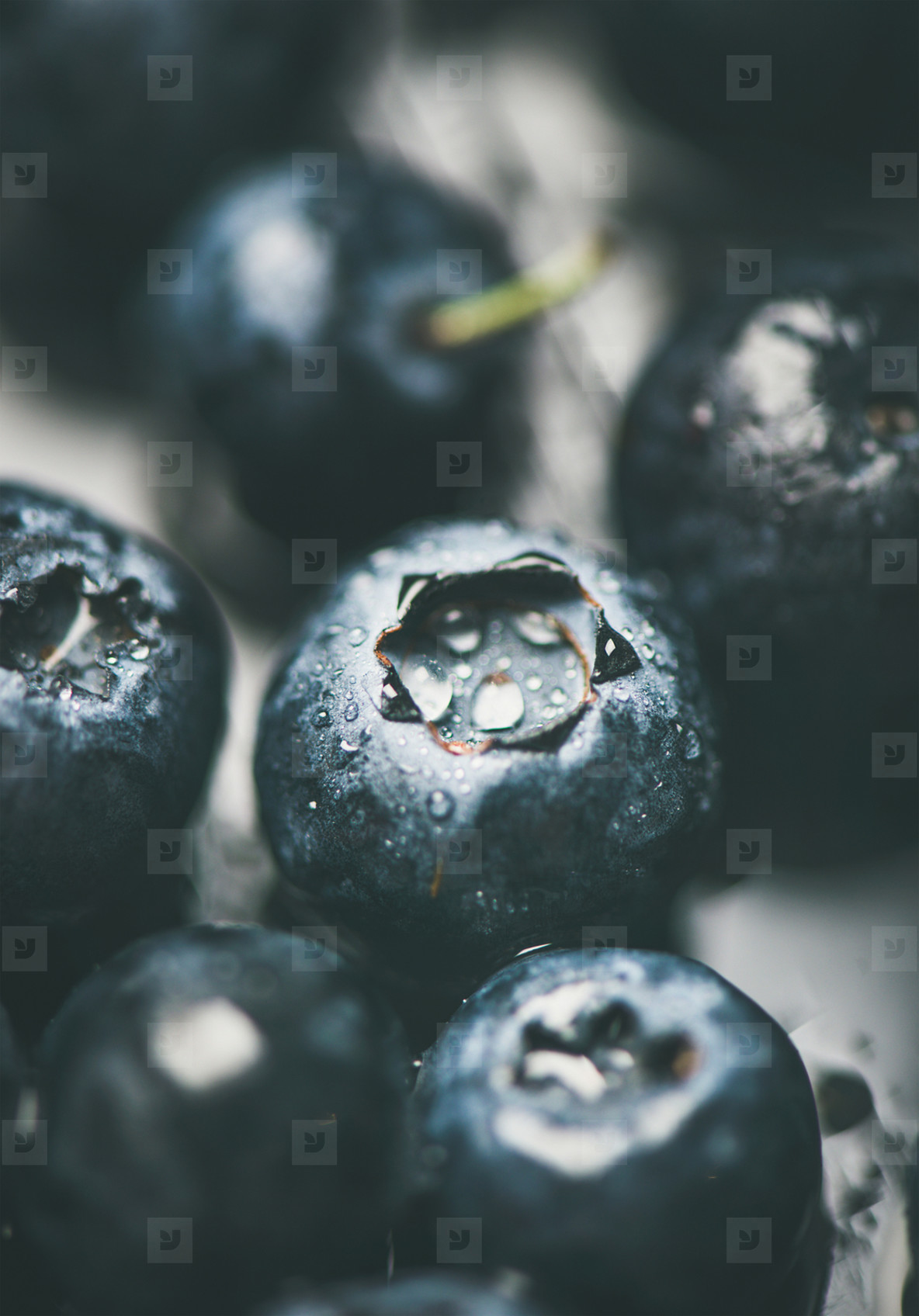 Fresh forest blueberry texture  wallpaper and background  vertical composition  close up