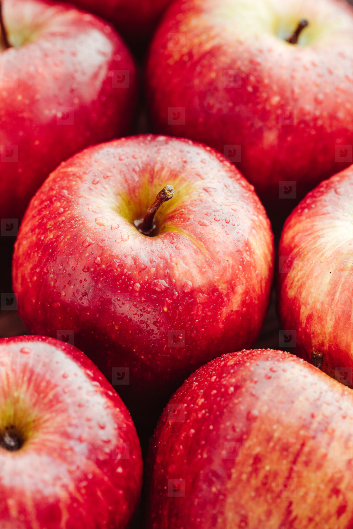 Harvest of ripe apples variety Red Delicious  Food background  macro photography