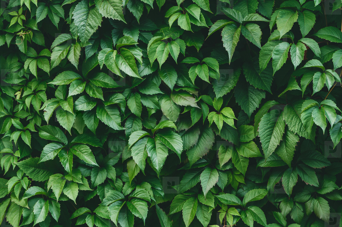 Vibrant green foliage nature full frame background