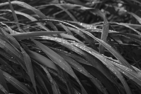Macro photography of wet grass