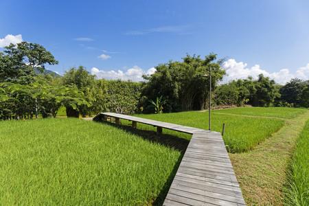Rice Field Path 04