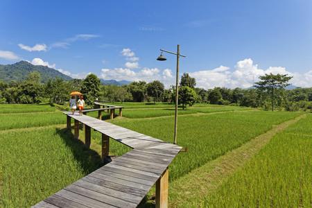 Rice Field Path 05
