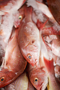 Close up red snapper fish on ice
