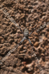 Close up spider with long legs spread over spider web