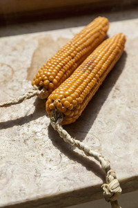 Close up vibrant dried corn cobs tied with braided rope
