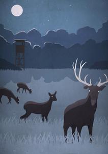 Deer grazing in field on full moon night