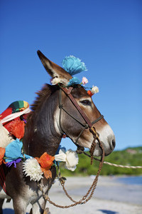 Donkey decorated with paper flowers on sunny beach  Mexico