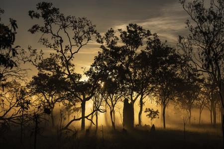 Ethereal sunrise behind silhouetted trees Kakadu National Park Australia