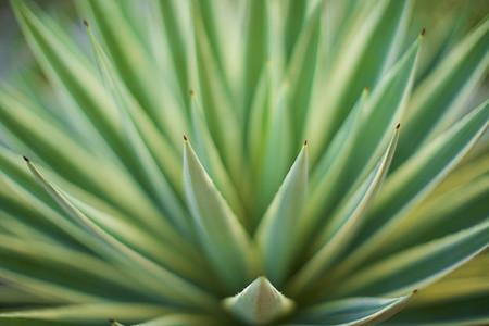 Extreme close up green aloe vera plant