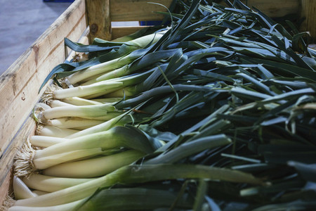Organic harvested leeks in wooden crate