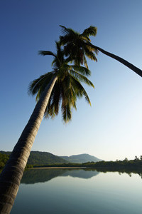 Palm trees over tranquil 02
