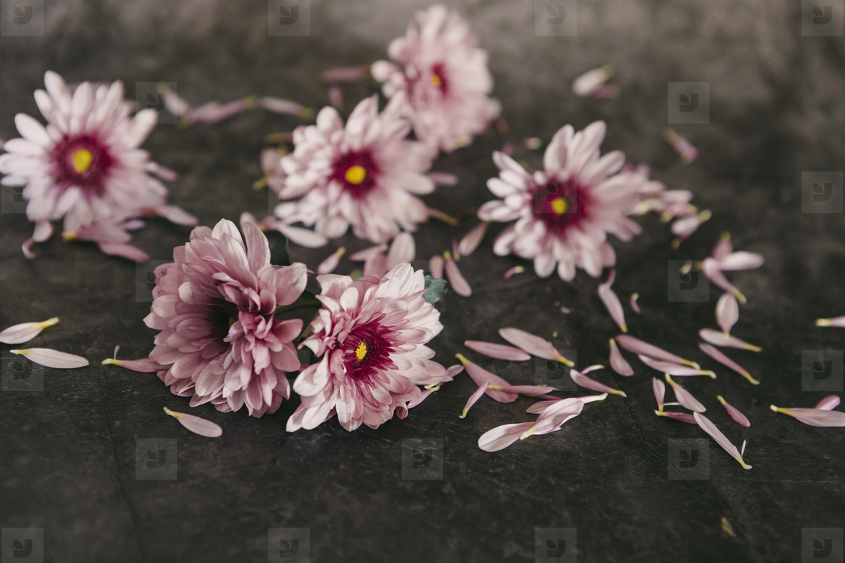 Pink flowers and petals