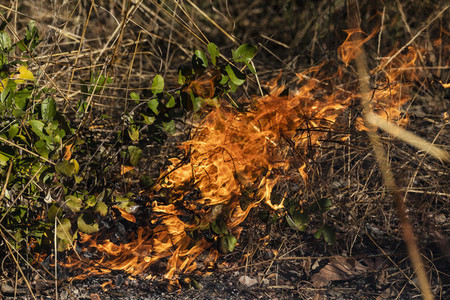 Preventative patch burning fire 01