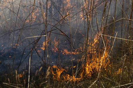 Preventative patch burning fire 02