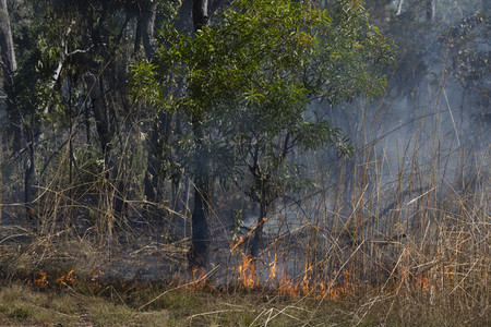 Preventative patch burning fire in woods  Kakadu National Park  Australia