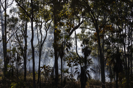 Preventative patch burning fire smoke in tropical forest Kakadu National Park Australia