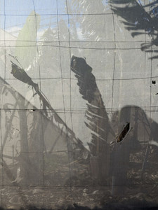 Shadow of palm leaves behind sunny fence
