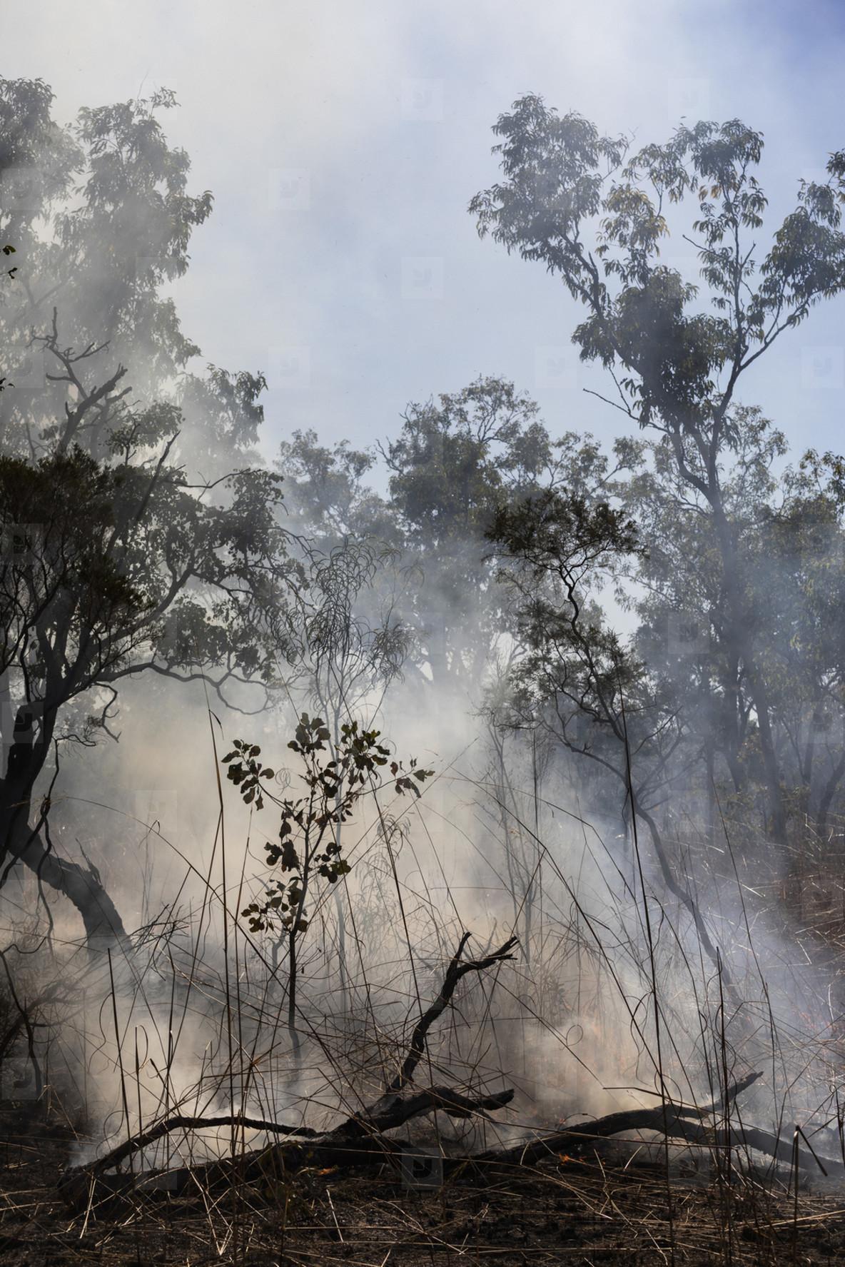 Smoke rising from smoldering preventative patch burn  Kakadu National Park  Australia
