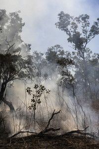 Smoke rising from smoldering preventative patch burn Kakadu National Park Australia
