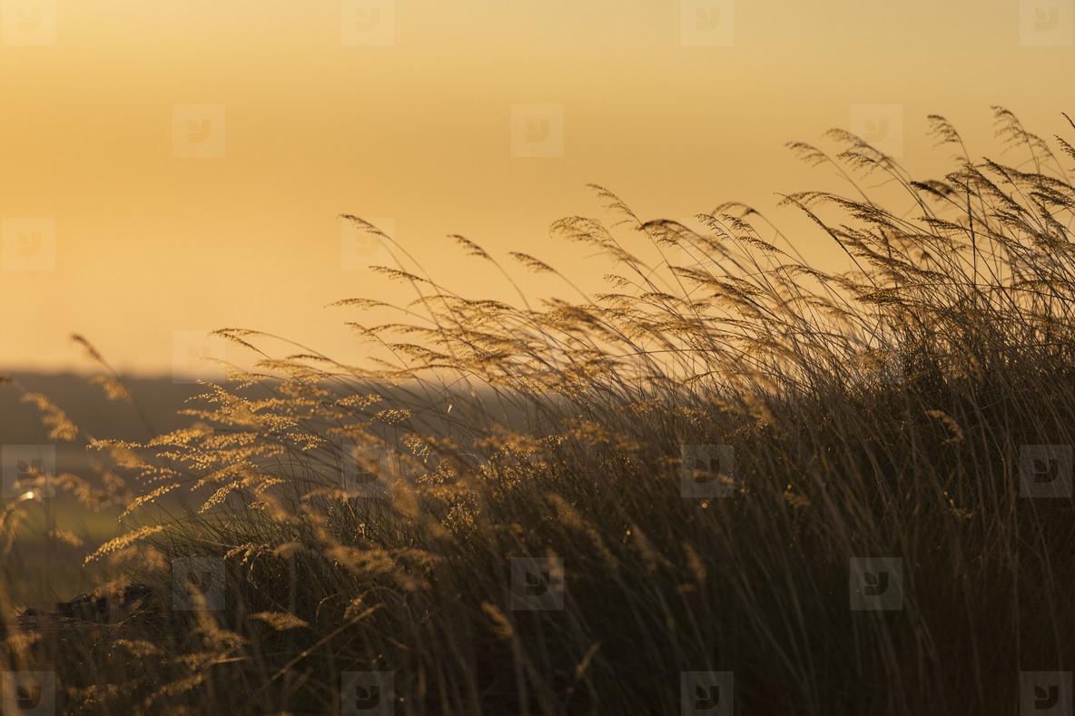 Tranquil tall grass at sunset  Kakadu National Park  Australia